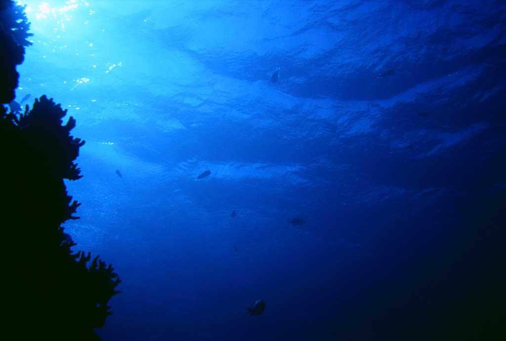 photo, la matière, libre, aménage, décrivez, photo de la réserve,Corail et surface de mer étincelante, bleu, poisson, ,