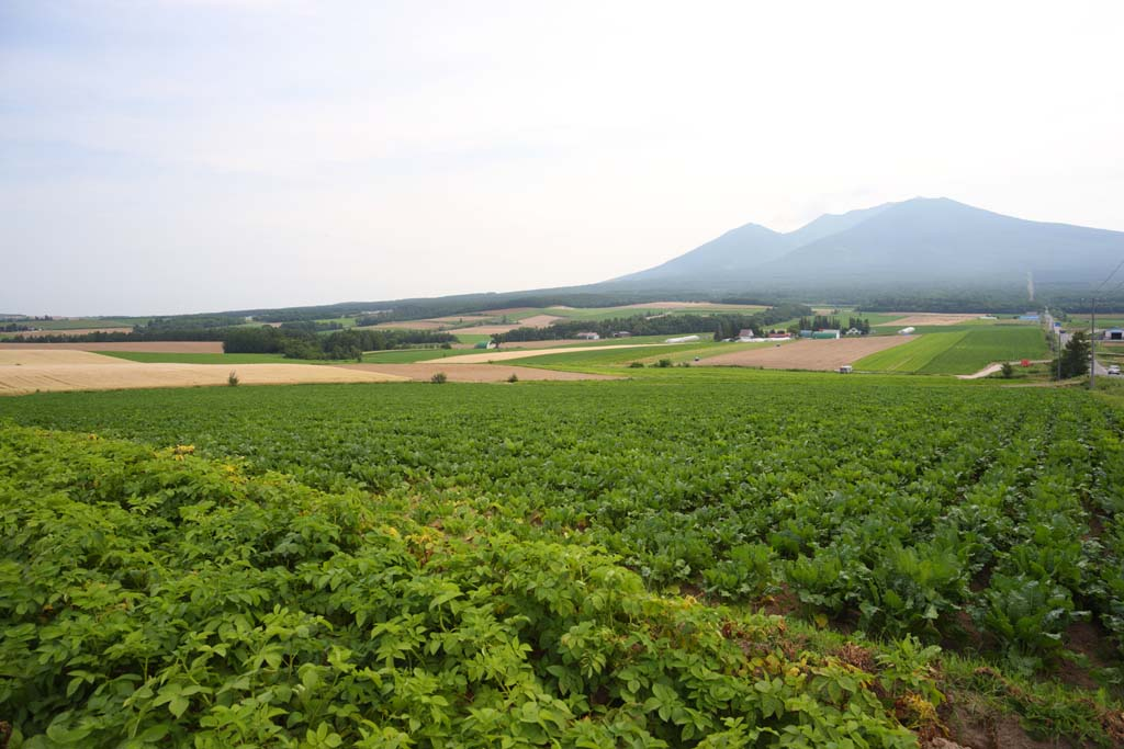 photo,material,free,landscape,picture,stock photo,Creative Commons,A rural scenery of Furano, field, Mt. Tokachi-dake, The country, rural scenery