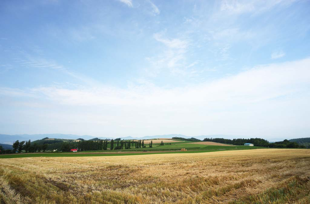 photo,material,free,landscape,picture,stock photo,Creative Commons,A rural scenery of Furano, field, poplar, The country, rural scenery
