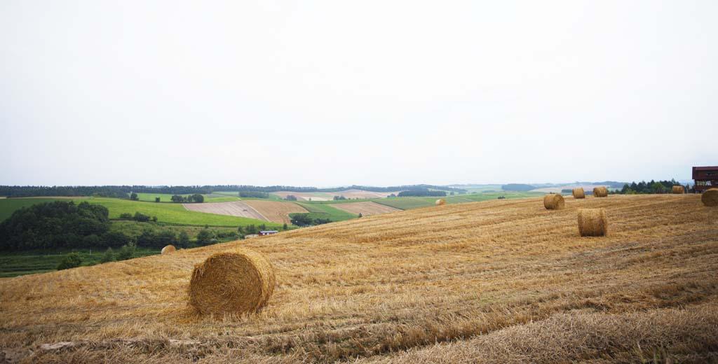 photo, la matière, libre, aménage, décrivez, photo de la réserve,Un décor rural de Biei, champ, rouleau d'herbe, Le pays, décor rural