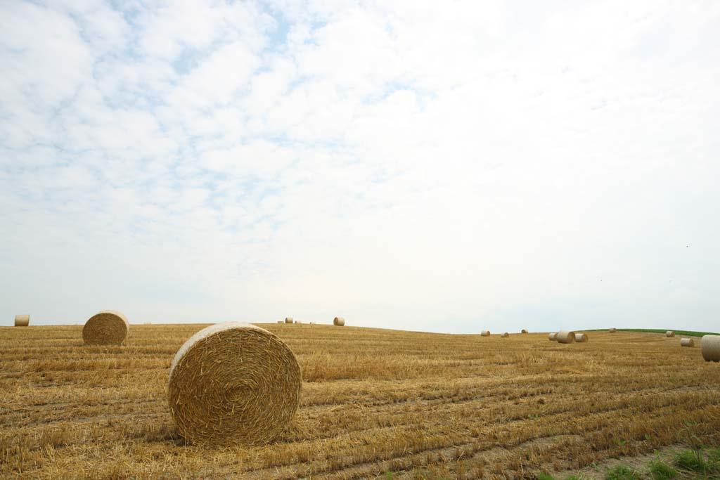 写真,素材,無料,フリー,フォト,クリエイティブ・コモンズ,風景,壁紙,牧草ロール, 畑, 牧草ロール, 田舎, 田園風景