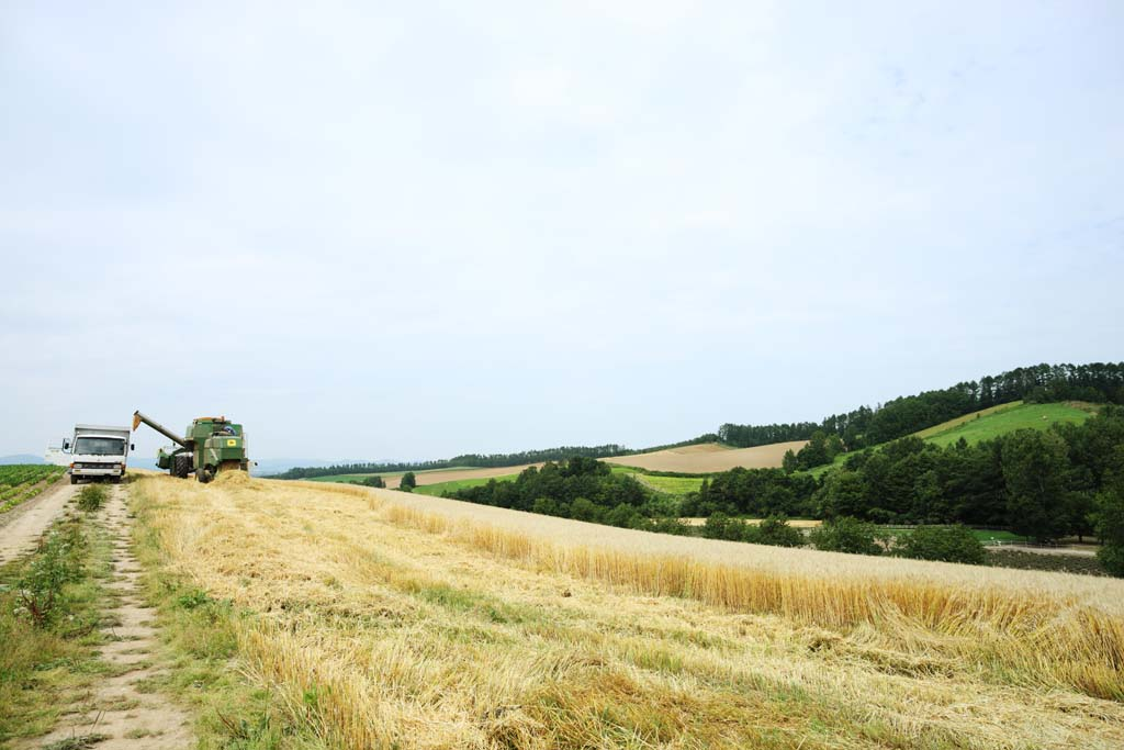photo,material,free,landscape,picture,stock photo,Creative Commons,A rural scenery of Biei, field, An agricultural machine, The country, rural scenery