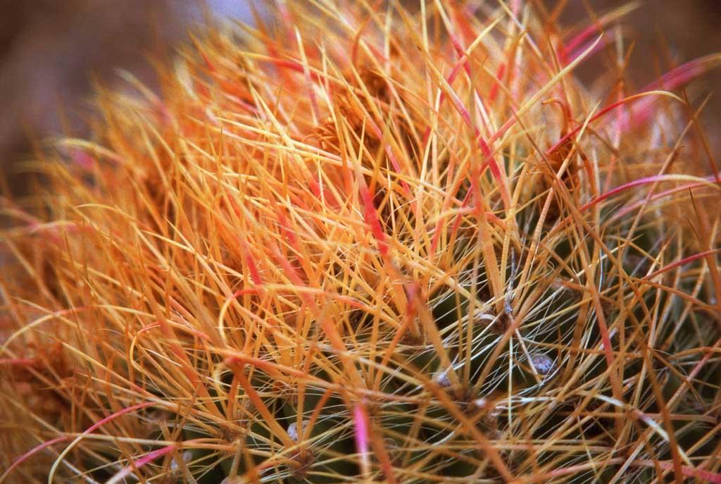 fotografia, materiale, libero il panorama, dipinga, fotografia di scorta,Spine, cactus, , ,