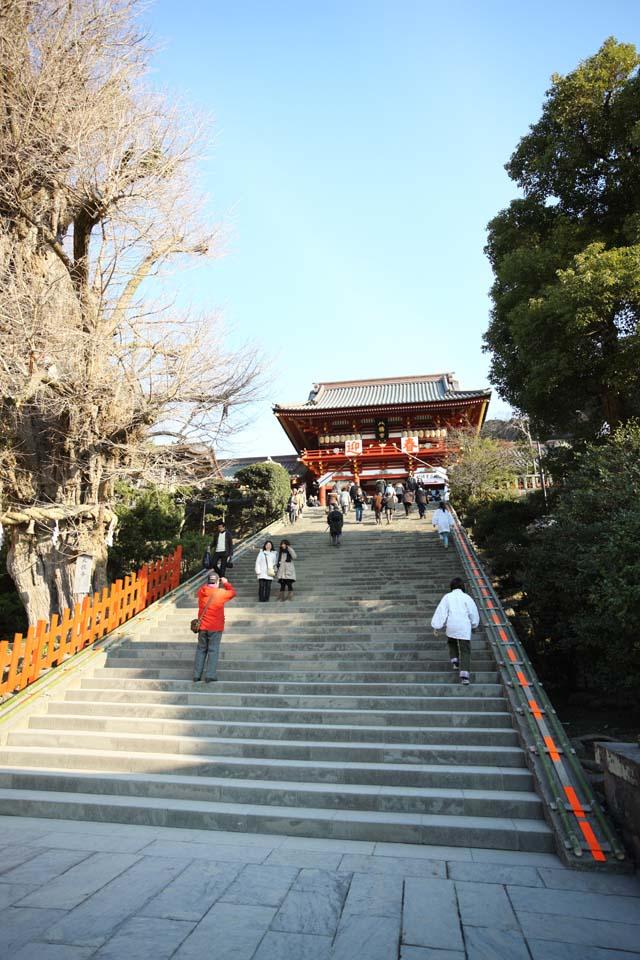 photo, la mati�re, libre, am�nage, d�crivez, photo de la r�serve,Hachiman-gu temple Hongu, , Un temple sup�rieur, temple principal, arbre sacr�