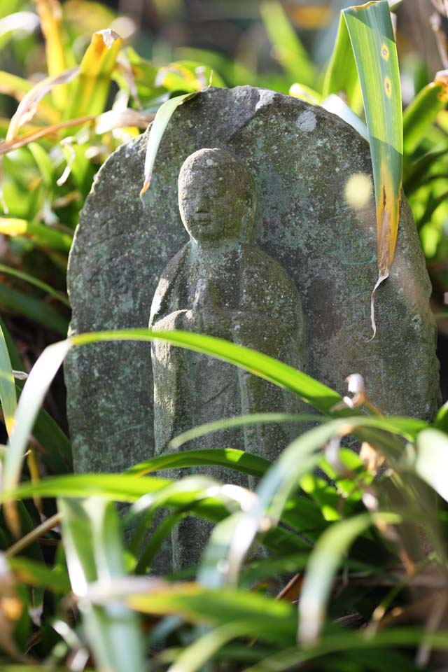 photo, la mati�re, libre, am�nage, d�crivez, photo de la r�serve,Temple Hase-dera Ishibotoke, statue de pierre, Grass, Bouddhisme, Chaitya