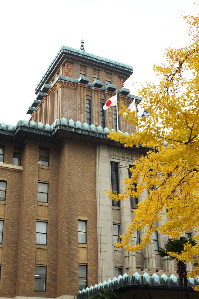 photo, la mati�re, libre, am�nage, d�crivez, photo de la r�serve,Le bureau de prefectural Kanagawa, ginkgo, Feuilles color�es, drapeau national, brique