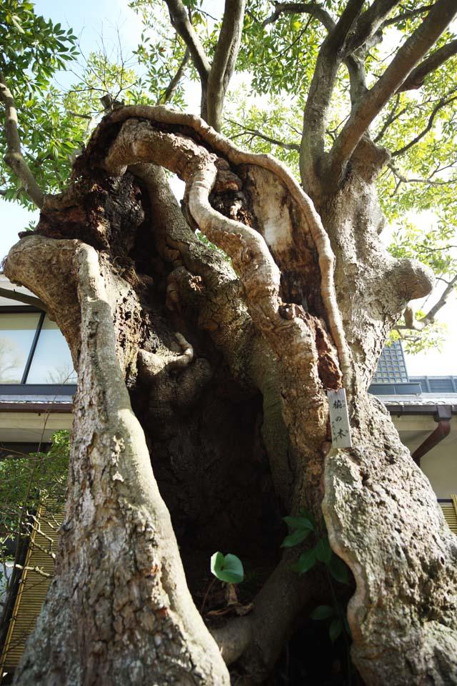 צילום, חינם גשמי, נוף, מדמין, צילום של מלאי ,העץ של הטאב, חלול, סינוס, הנביחה, עץ גדול
