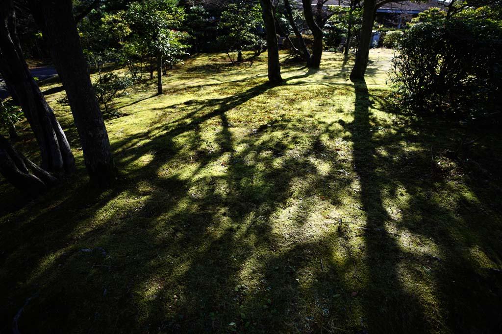 Фото, материальный, свободный, пейзаж, фотография, фото фонда.,molding тени дерева, Мох, Тень дерева, Дерево, Тень