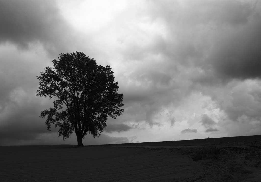写真,素材,無料,フリー,フォト,クリエイティブ・コモンズ,風景,壁紙,哲学の雲, 美瑛, 木, 雲, 空