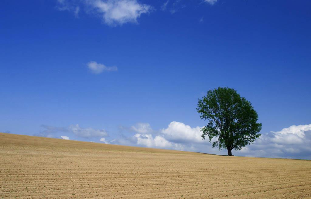 写真,素材,無料,フリー,フォト,クリエイティブ・コモンズ,風景,壁紙,哲学の木の夏, 畑, 木, 青空, 雲