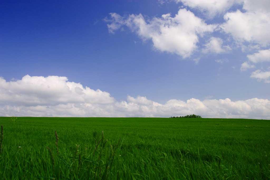 写真,素材,無料,フリー,フォト,クリエイティブ・コモンズ,風景,壁紙,牧草と青空, 牧草, 雲, 青空,