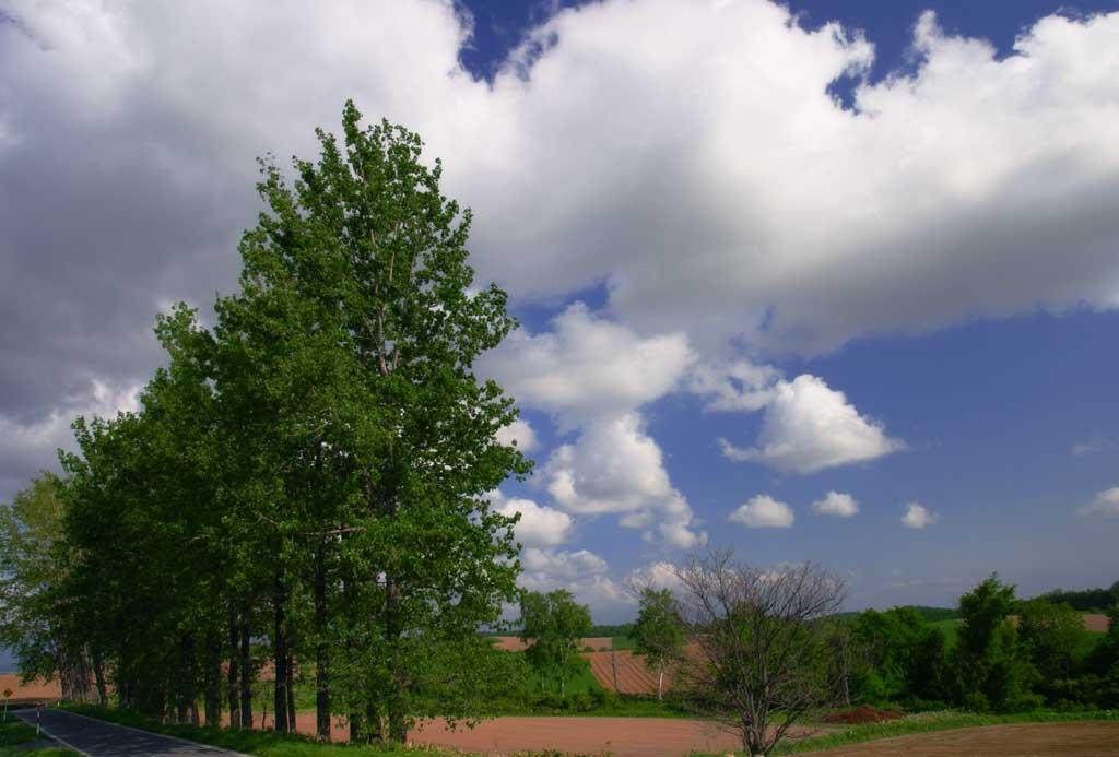 写真,素材,無料,フリー,フォト,クリエイティブ・コモンズ,風景,壁紙,並木と雲, 林, 雲, 青空, 並木