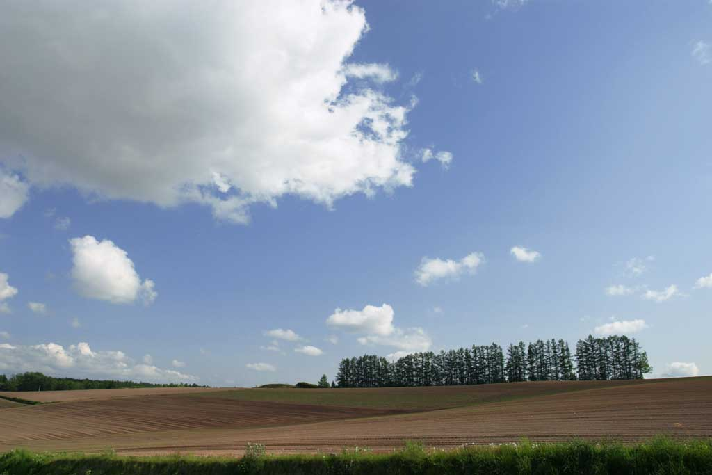 photo,material,free,landscape,picture,stock photo,Creative Commons,Tree line, farmland, and cloud, grove, cloud, blue sky, field