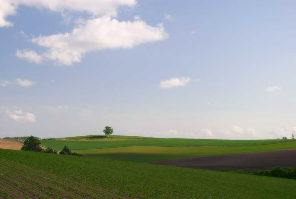 photo,material,free,landscape,picture,stock photo,Creative Commons,Vast farmland, field, cloud, blue sky,