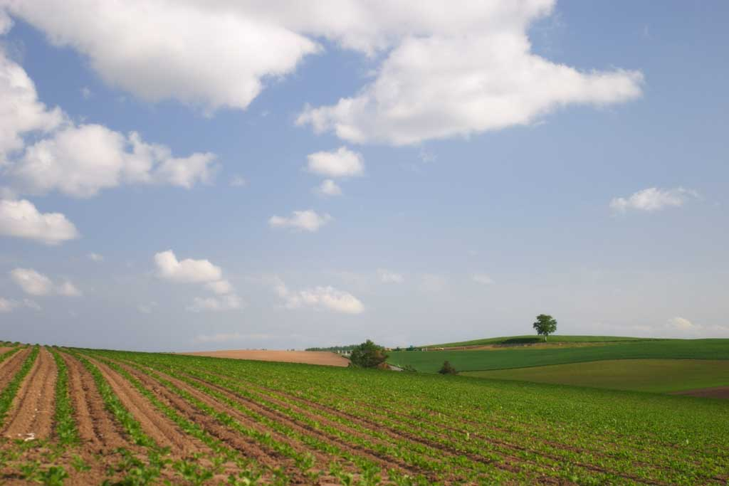 photo,material,free,landscape,picture,stock photo,Creative Commons,Tree and ridges of a farmland, field, cloud, blue sky,